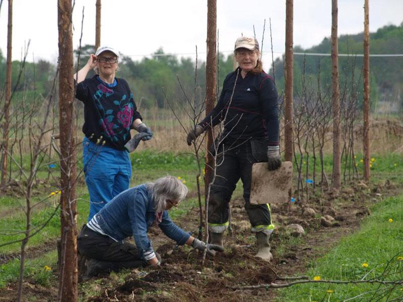 Föreningen Växtkraft hjälper till med planteringen.